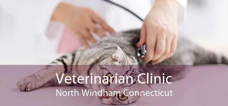 Veterinarian Clinic North Windham Connecticut