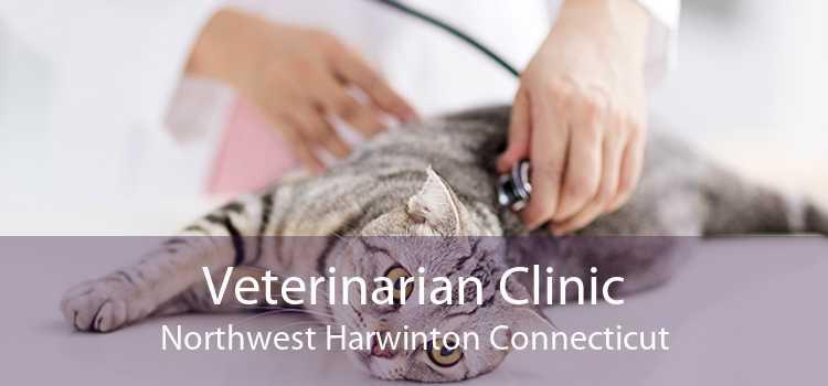 Veterinarian Clinic Northwest Harwinton Connecticut