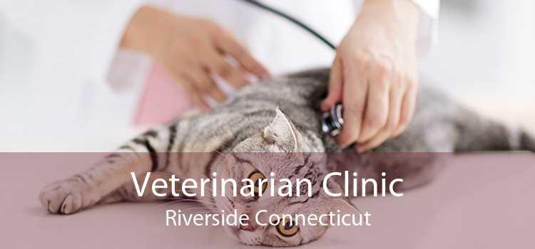 Veterinarian Clinic Riverside Connecticut